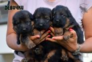 01_Puppies_Yamaguchi_Yunessa_GIRLS