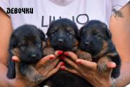 02_Puppies_Yamaguchi_Yunessa_GIRLS