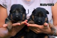 03_Puppies_Yamaguchi_Yunessa_BOYS