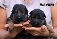 04_Puppies_Yamaguchi_Yunessa_BOYS