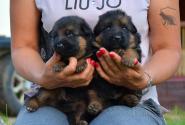 06_Puppies_Yamaguchi_Yunessa_BG