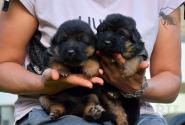 07_Puppies_Yamaguchi_Yunessa_BG