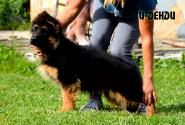 10_Puppies_Yamaguchi_Yunessa_I_DANDY
