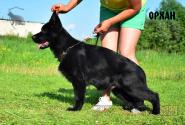 14_Puppies_Uragan_Yoruka_ORHAN