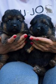01_Puppies_Mike_Anka_BG