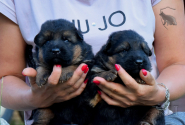 02_Puppies_Mike_Anka_BG