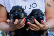 02_Puppies_Mike_Anka_BG