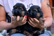 03_Puppies_Mike_Anka_BG