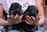 04_Puppies_Mike_Anka_BG