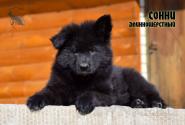 29_Puppies_Billy_Adriana_SONNY_BL_LH
