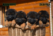 06_Puppies_Uragan_Raketa3_BG