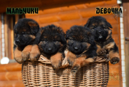 07_Puppies_Uragan_Raketa3_BG