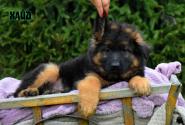 14_Puppies_Uragan_Raketa3_HAJD