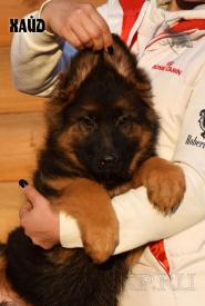 15_Puppies_Uragan_Raketa3_HAJD