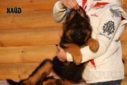 16_Puppies_Uragan_Raketa3_HAJD