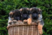 02_Puppies_Yamaguchi_Yunita_GIRLS
