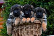 05_Puppies_Yamaguchi_Yunita_BOYS