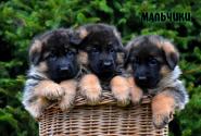 08_Puppies_Yamaguchi_Yunita_BOYS