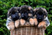 09_Puppies_Yamaguchi_Yunita_BOYS