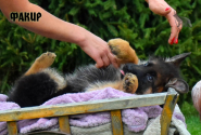 09_Puppies_JV_Nikita_FAKIR
