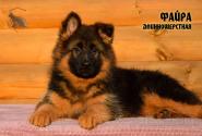 16_Puppies_JV_Nikita_FAJRA_LH