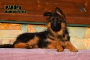 21_Puppies_JV_Nikita_FAKIRA_LH