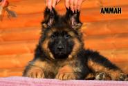 03_Puppies_Garry_AMMAN_LH