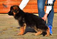 04_Puppies_Garry_AMMAN_LH