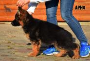 08_Puppies_Garry_ARNO_LH