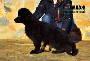 22_Puppies_Garry_Zambiya_IMIDZH_LH