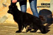 23_Puppies_Garry_Zambiya_IMIDZH_LH