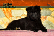 24_Puppies_Garry_Zambiya_IMIDZH_LH
