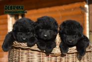 01_Puppies_Umaro_Tseyra_GIRLS_BL_LH