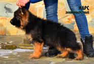 04_Puppies_Umaro_Cikuta_NARS_LH