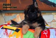 24_Puppies_Vargas_Viagra_RIOLO_LH