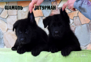 12_Puppies_JV_Verso_SHAMIL_SHTURMAN_BL