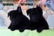 13_Puppies_JV_Verso_SHAMIL_SHTURMAN_BL