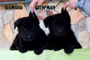 14_Puppies_JV_Verso_SHAMIL_SHTURMAN_BL