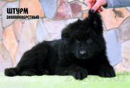 15_Puppies_JV_Verso_SHTURM_LH_BL