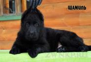 18_Puppies_JV_Verso_SHAMIL_BL
