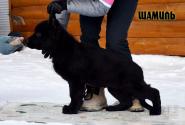 19_Puppies_JV_Verso_SHAMIL_BL