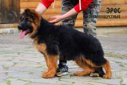 22_Puppies_Uragan_Zejna_EROS_LH