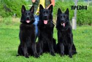 02_Puppies_Gandy2_Zabava2_PREDKI_BL