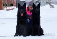 03_Puppies_Gandy2_Zabava2_PREDKI_BL