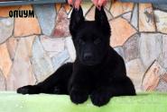04_Puppies_Gandy2_Zabava2_OPIUM_BL
