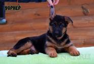 01_Puppies_Billy_Vivien_WORNER
