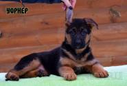 02_Puppies_Billy_Vivien_WORNER