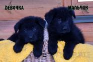 13_Puppies_Mike_Zebra_BOY_GIRL_BL