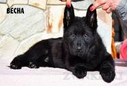 17_Puppies_Mike_Zebra_VESNA_BL
