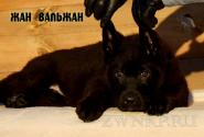 01_Puppies_Uragan_NikitaDA_JV_BL